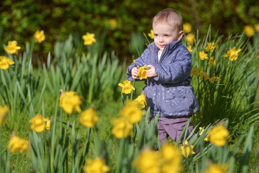 13-month-old Charlotte Rose looks at the daffodils in Ruskin park, Herne Hill, London.