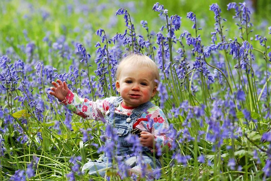 One year old Indy Jennings from Bristol amongst the best ever display of Bluebells now on show at Westonbirt.