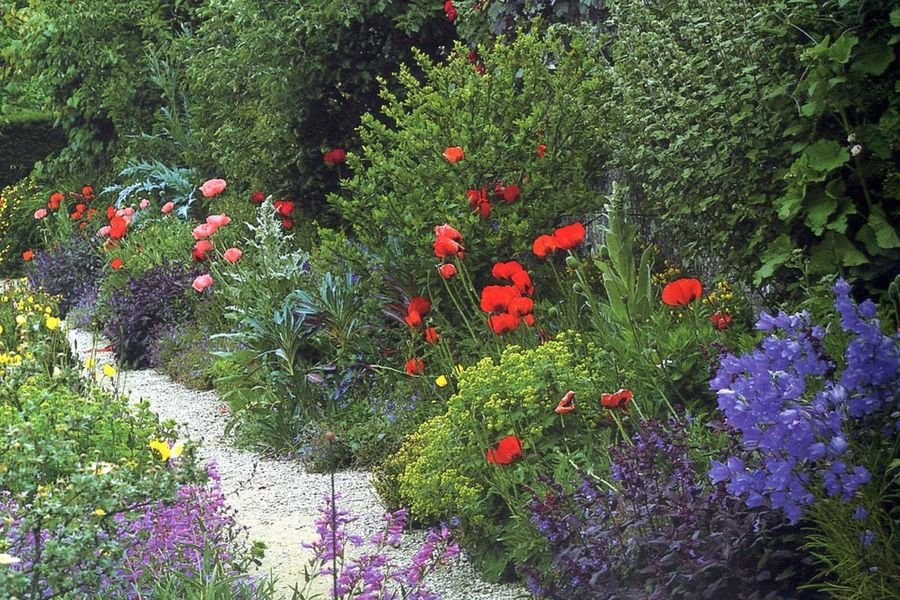 Oriental poppies, campanulas, penstemons and purple sage in the double borders leading to the Dovecote at Snowhill Manor in Gloucestershire. From Gardens Of The National Trust by Stephen Lacey. (National Trust,  29.99) - See GARDENING Column.