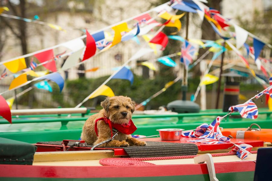 A dog sits on the roof of a canal boat during the Inland Waterways Association's annual Canalway Cavalcade festival, at Little Venice, London, which since 1983 has featured a gathering of decorated narrow boats taking part in competitions and parades.
